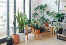 plantas de interior.jpg